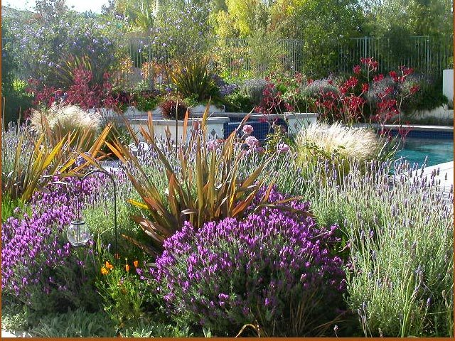 Drought-Resistant-Gardening