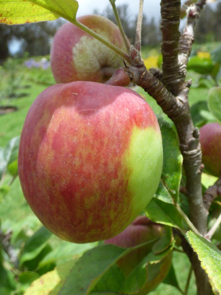 anna apple photo