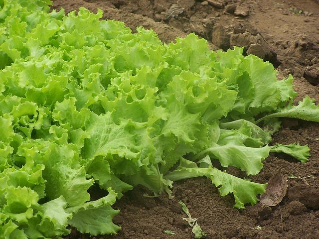 vegetable Soil photo