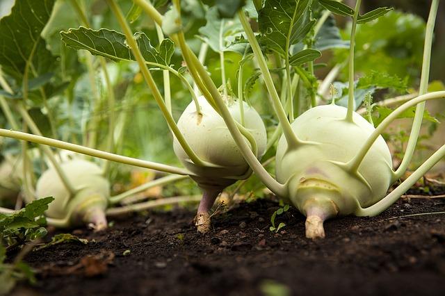 Alkaline vegetable garden soil pat welsh organic and for Vegetable garden soil